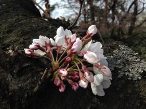 写真 2014-04-20 14 19 57