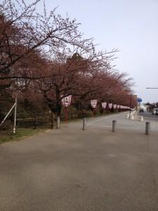 写真 2014-04-20 15 10 42