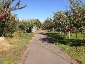 りんご園の小道